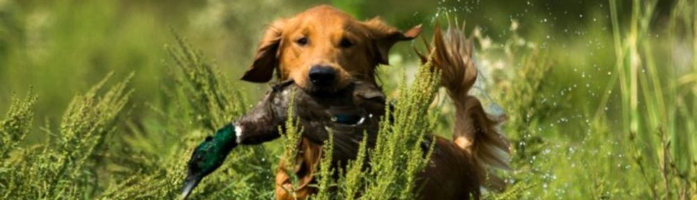 CENTRAL FLORIDA HRC | Central Florida Hunting Retriever Club
